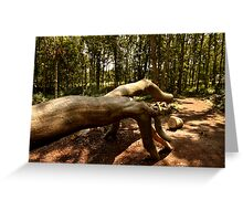 Shows Us The Way - Fallen Tree, Bowdown Woods Greeting Card