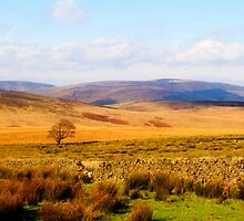 Looking towards Gisburn Forest by maureen bracewell