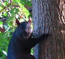 Swearing, squirrel-style by MarianBendeth