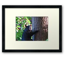 Swearing, squirrel-style Framed Print