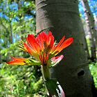 Indian Paintbrush and Aspen by Bill Hendricks