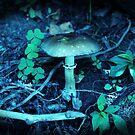 Lomography Mushroom Photography by Concetta Kilmer