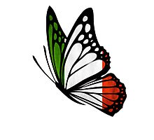 Italian Flag Butterfly Photographic Print