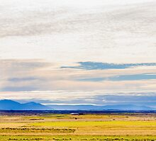 Icelandic horses on a beautiful green field with amazing colored sky, Iceland by Stanciuc