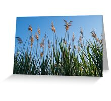 Towering Grasses Greeting Card