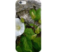Convolvulus arvensis) or Bindweed iPhone Case/Skin