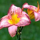2 Lilies by Susan S. Kline