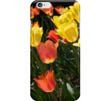 The colored lanterns iPhone Case/Skin