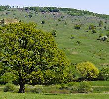 Landscape by Stanciuc