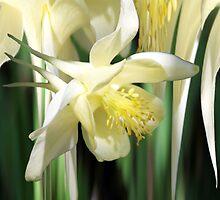 Columbine Magic ~ Illusory Flower by SummerJade