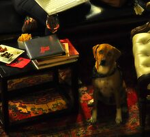 Sophisticated Pooch by Karen Peron