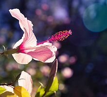 Flower by Pink Poppy  Photography