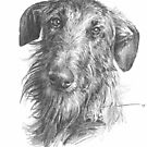 hairy, handsome, and older dog drawing by Mike Theuer