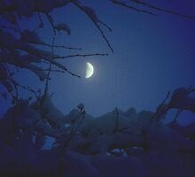 Winter Moon by OldHag