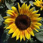 Sending some sunshine your way by vigor