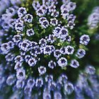 Purple Lensbaby Flowers by Indea Vanmerllin