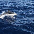 striped dolphin  - Italy  by chiaraSibona
