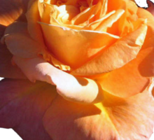 PEACH ROSE WITH YELLOW HIGHLIGHTS Sticker