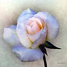 Roughsilk Rose Pillow by RC deWinter