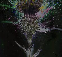 Thistle by Rachel Kelly