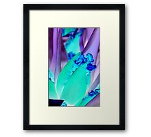 blue purple tulip Framed Print