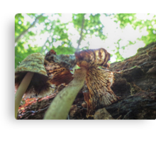 Scaly Inky Cap Canvas Print