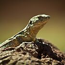 Tenerife lizard 2 by Rachel Kelly