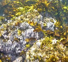 Underwater kelp and seaweed in Sydney Harbour by Emma M Birdsey