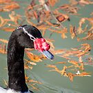 7214 black headed goose by pcfyi
