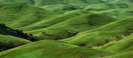 Green Hills by Radek Hofman