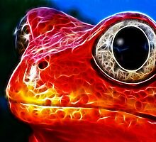 Red Frog (medium) by eltdesigns