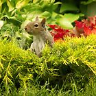 Squirrel in the Garden by Yannik Hay