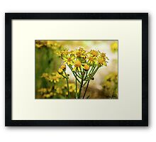 Wild Flowers Watercolor 2014 Framed Print