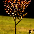 72 lone tree by pcfyi