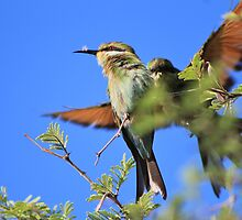 Bee-eater - African Wild Birds - Colors of Flight by LivingWild