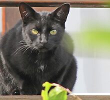 Black cat on the deck by Lee Jones