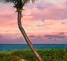 Beautiful palm on a tropic beach. by DDMITR