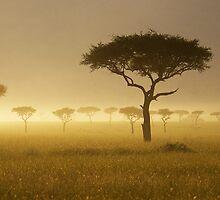 Masai Mara #1 by António Jorge Nunes