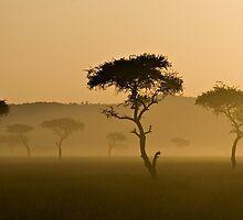 Masai Mara #3 by António Jorge Nunes