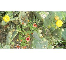 Prickly Pear and Texas Wildflowers Photographic Print