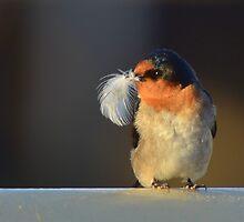 Welcome Swallow by helmutk