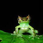Vietnamese Superspikey Frog by Jodi Rowley