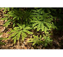 Sunlit Forest Floor Treasures Photographic Print