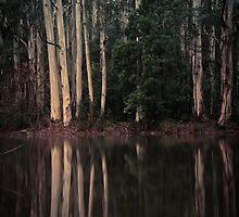 Sanatorium Lake by Noeline R