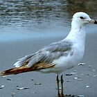 At the Jersey Shore - Seagull by ctheworld