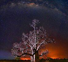 Bushfire Boab by Rod Hartvigsen