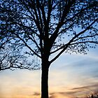 Silhouetted By Dusk by dgweathers