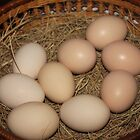 The benefits of free range eggs (for the chicken) by Maree  Clarkson