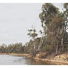Murray River  by Kim Jackman