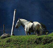 White Horse on a Hill by rhamm